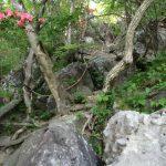 鍋割山登山(群馬県)