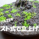 【アクアリウム】オーパル25の小型水槽をミスト式で立ち上げる!その5(動画;2週間経過報告)