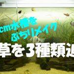 【アクアリウム】動画;90cm水槽のプチリメイク、新しい水草を追加