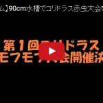 【アクアリウム】第1回コリドラス赤虫モフモフ大会(動画)