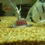 【アクアリウム】第1回コリドラス赤虫モグモグ大会開催!コリドラスは食事している姿が本当に可愛い!!