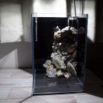 【アクアリウム】New!!底面フィルターで小型水槽の立ち上げ!~その2~