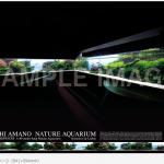 【アクアリウム】AJ(アクアジャーナル)8月号の付録「リスボン海洋水族館のポスター」めっちゃ欲しい