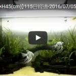 【アクアリウム】【W90×D45×H45(cm)】115日経過-2016/07/05-
