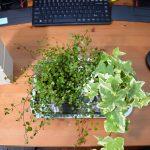 【ボタニカルライフ】室内用観葉植物を買ったよ