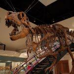 【レジャー】群馬の神流町恐竜センター良いよ!特にシアター!!あと外のせせらぎ街道が最高!アクアリスト向け!!