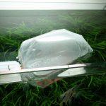 【アクアリウム】水槽に新しい仲間が増えました!コリドラスパンダロングフィン!